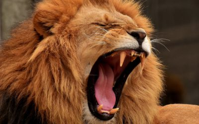 Are You Safe From the Roaring Lion?